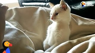 Download Kitten Born With Twisted Legs Is The Spunkiest Of His Siblings - CHURRO   The Dodo Video