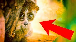 Download 10 Cute Animals That Can Actually Kill You Video