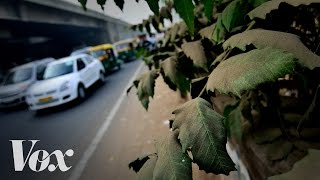Download Why cities should plant more trees Video