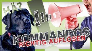 Download Wie du Kommandos richtig auflöst [Hundetraining Fehler vermeiden] Video