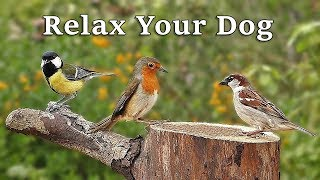 Download Dog TV : A Video To Calm Your Dog - Garden Birds and Bird Sounds Video