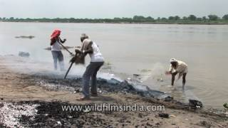 Download Washing human ash and remains down the Ganges river, after a cremation on the river bank Video