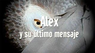 Download Alex, y su último mensaje Video