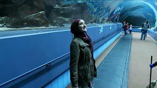 Download The Yaz Show – Georgia Aquarium Video