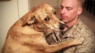 Download TRY NOT TO CRY: Dogs Meet Their Owner After Long Time II [NEW] (HD) [Funny Pets] Video