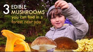 Download 3 delicious edible mushrooms you can find in forest near you Video