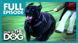 Download The Dogs That Walk Their Owners: Toadie and Smartie | Full Episode | It's Me or The Dog Video