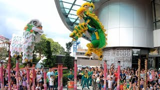 Download CNY 2019 ~ Acrobatic Lion Dance (双狮高桩表演 Múa Lân) by Khuan Loke 群樂 @ The Starling (21/1/2019) Video
