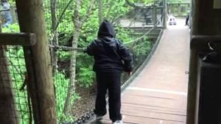Download Billy, 15 1/2 yrs old, with #Duchenne MD walks suspension bridge Video