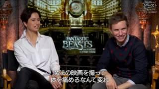 Download 映画『ファンタスティック・ビーストと魔法使いの旅』エディ&キャサリンインタビュー【HD】2016年11月23日公開 Video