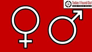 Download The Origin of the Male and Female Symbols Video