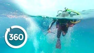 Download MythBusters: Shark Shipwreck (360 Video) Video