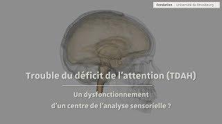 Download TDAH : conférence de Michael Reber, chercheur Inserm à l'Université de Strasbourg - CNRS Video