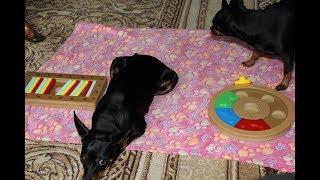 Download Vlog zabawki edukacyjne dla psów + spacer Video
