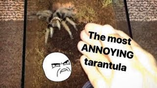 Download This TARANTULA is SO ANNOYING !!! (but for a creative reason) Video