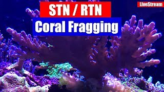 Download Every Reefers worst nightmare and how to deal with it! STN / RTN and Coral Fraggin! Video