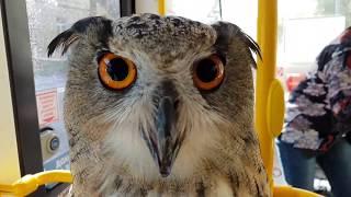 Download Филин Ёль едет в парк на трамвае делать фото себя с новым клевалом Video