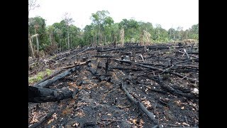 Download Deforestation: Facts, Causes & Effects Video
