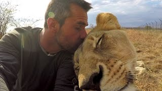 Download American Tourist Killed by Lion | Kevin Richardson - The Lion Whisperer responds Video