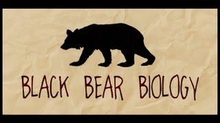 Download Black Bear Biology Video