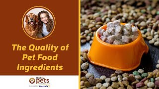 Download The Quality of Pet Food Ingredients (Part 1 of 2) Video