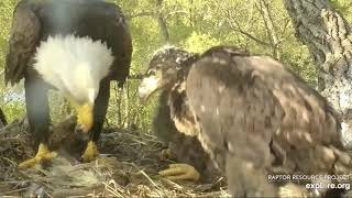 Download Decorah Eagles, Mom With two Fish 5/15/19 Video
