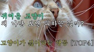 Download 귀여운 고양이 왜 나만 보면 피하는 걸까? 고양이가 싫어하는 행동 [TOP4] Video