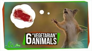 Download 6 ″Vegetarian″ Animals that Will Give You Nightmares Video