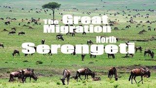 Download Safari en Tanzania - Parque nacional Serengeti Parte 1 - Desde el norte al Corredor oeste Video