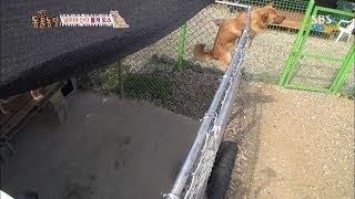 Download SBS [동물농장] - 철창을 사다리처럼 타는 개 Video
