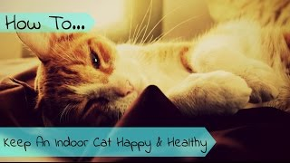 Download How To Keep An Indoor Cat Happy And Healthy Video