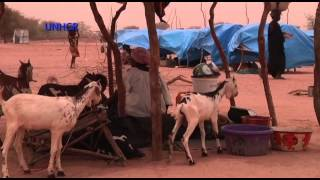 Download Niger: Flight from Mali Video