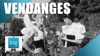 Download 1969 : Les vendanges de Montmartre | Archive INA Video