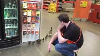 Download Home Depot Duck Rescue! Eek! Video