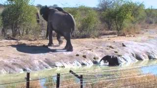 Download Elephant calf rescue at Madikwe Game Reserve Video