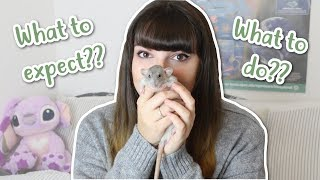 Download 🏠 BRINGING HOME RATS 🏠 | What to do & Expect Video