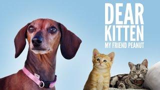 Download Dear Kitten: My Friend Peanut Video