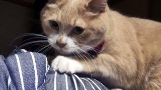 Download 動かない猫&ジッとしない猫【猫日記こむぎ&だいず】2018 04 16 Video
