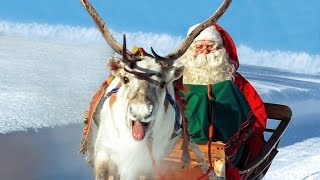 Download Reindeer of Santa Claus in Lapland Finland - secrets of Father Christmas' reindeer in Rovaniemi Video