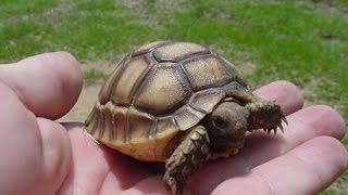 Download Baby Tortoise Making! Kamp Kenan S1 Episode 4 Video
