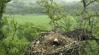 Download Decorah North Nest ~ Heartbreaking ~ Dad Shelters Deceased Babies From Storm 5.25.18 Video