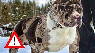 Download Top 10 Perros Que Son Para Expertos Video
