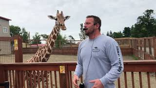 Download April the Giraffe Best Jordan Patch talk Tajiri Steals the Show Video