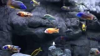 Download Northfin fish food update Video