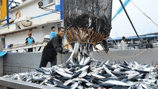 Download Big Catch Fishing in The Deep Sea With Big Boat - Amazing Tuna Fish Processing Skill Video