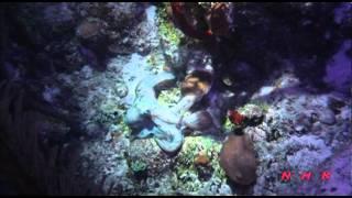 Download Belize Barrier Reef Reserve System (UNESCO/NHK) Video