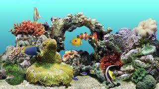 Download Aqua Real 🐠 12 HR Water Bubbles Sound & Coral Reef 🐠 Virtual Aquarium Video