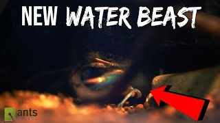 Download ANTS vs. KRAKEN (WATER MONSTER) Video
