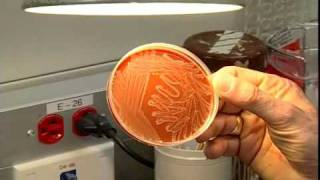 Download A tour of the Microbiology Lab - Section one Video