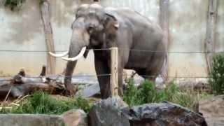 Download Prague Zoo / Zoo Praha Video